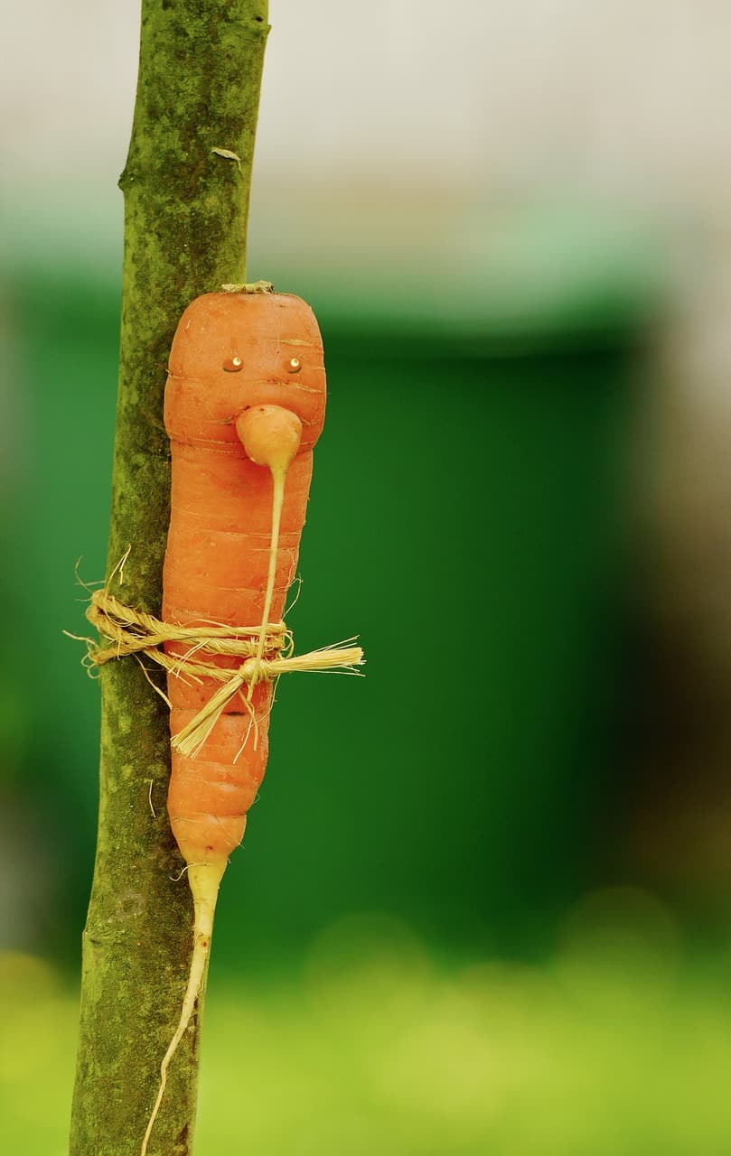carrot tied to a tree