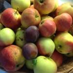 scrumptious apples