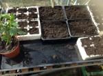 seeds Feb 2014