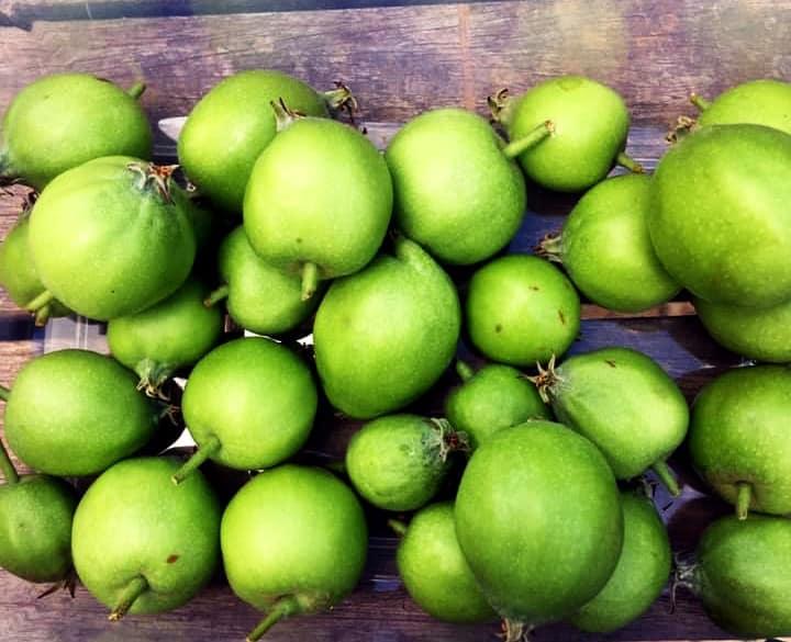 apple thinnings