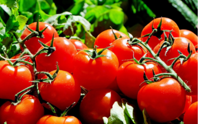 Tomato Scones, 5p each