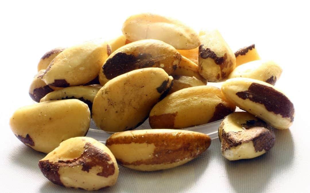 brazil-nut-638972_1920-1080x675