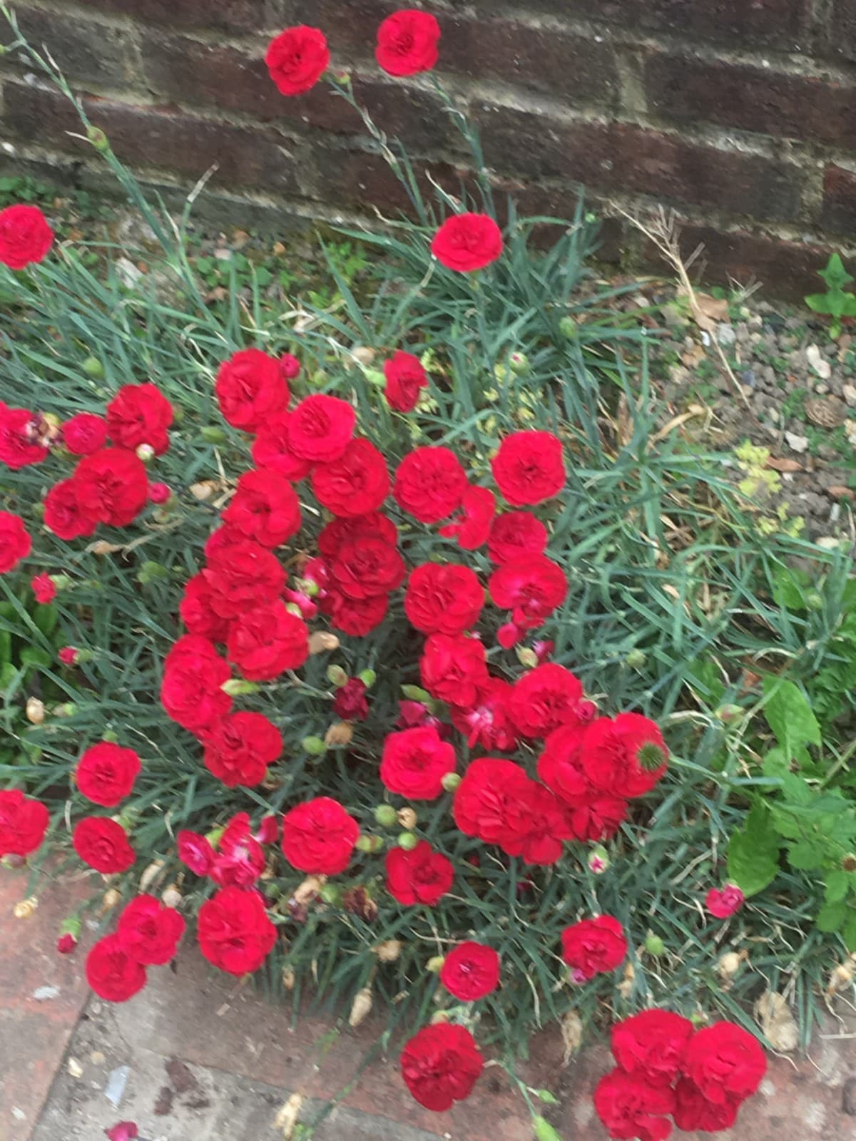 red pink plant